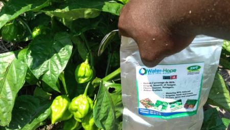 Culture du piment avec Water Hope chez Agro World Group