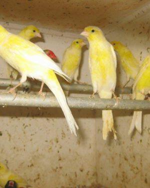 Élevage d'oiseaux