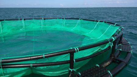 Nouveaux équipements  de production de poissons  : capacités  2 tonnes à 12.5  tonnes